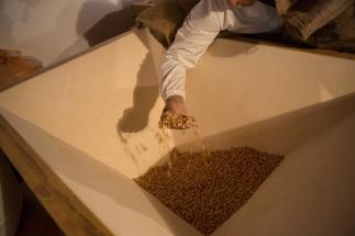 il mugnaio controlla la qualità del grano